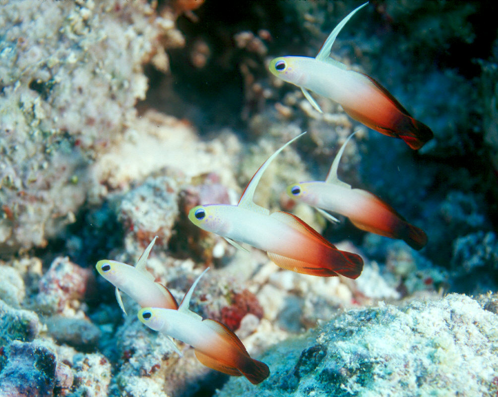 New Blog 1: Dartfish